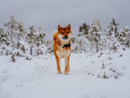 Price Alert: Shiba Inu To The Moon? Meme Crypto Jumps To New All-Time Highs