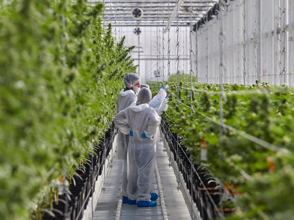 Tilray Analyst S Conversation With Cfo Builds Faith In Positive Catalysts