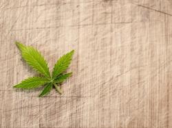 No Reefer Madness Here: 5 Cannabis-Focused Stocks For The 420 Trader