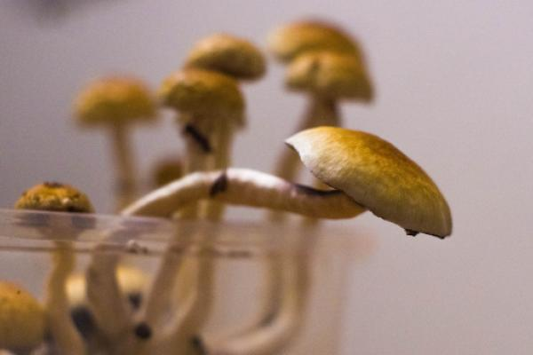Will Hawaii Pass A Psilocybin Legalization Bill? Senator Chang Makes A Strong Case