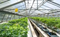 Cannabis REIT IIP Touts Strong Acquisitions and Portfolio Performance In Q1 2021