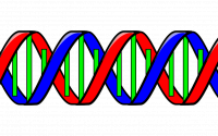A strand of DNA.