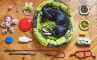 Dog food and toys.