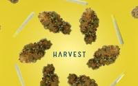 Photo courtesy of Harvest.