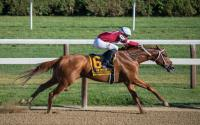 Preakness Preview: How to Watch It, How To Bet On It And More