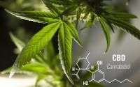 CBD marijuana leaf