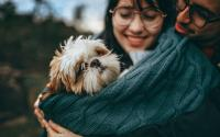 6 Pet Stocks And An ETF For National Pet Day