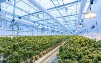 Cannabis Co. Jushi Holdings' Buy of Dalitso Facility Fortifies Virginia Position