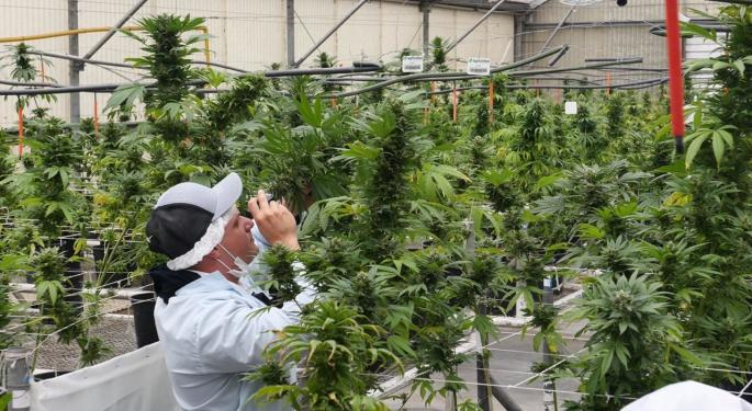 Green Point Expands Internationally With Colombian Seeds License