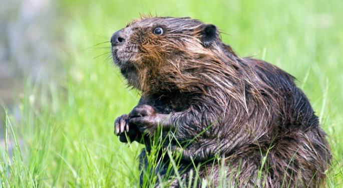 Canadian Internet Service Downed By Beavers Chewing Cables: Report