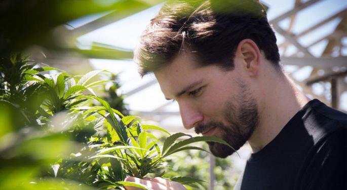 Cool Cannabis Careers: Bentley Rolling, Weed Photographer And Podcaster