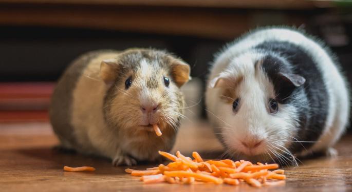 Criptomoneda Hamster se desploma un 40% en un día