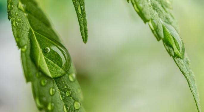 Aleafia Subsidiary Secures 'Breakthrough' Cultivation License For Niagara Facility