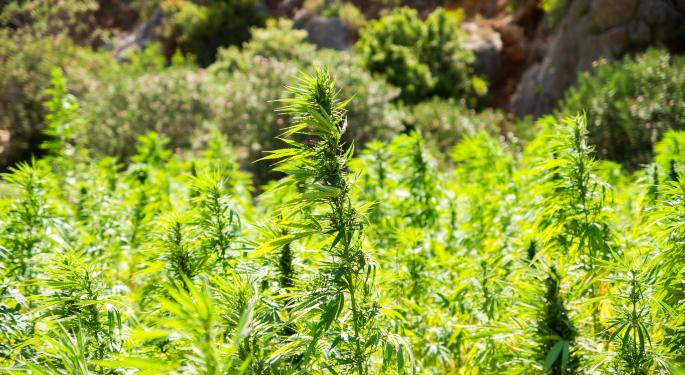 New Hemp Crops Cannot Escape An Old Adversary: Mold