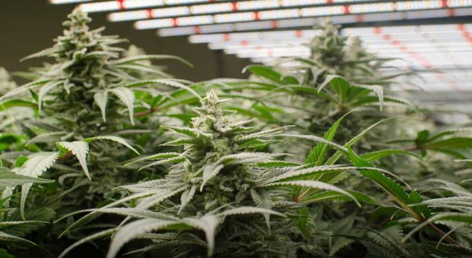 How A Deal With Osram Bolstered Fluence's Cannabis Cultivation Services
