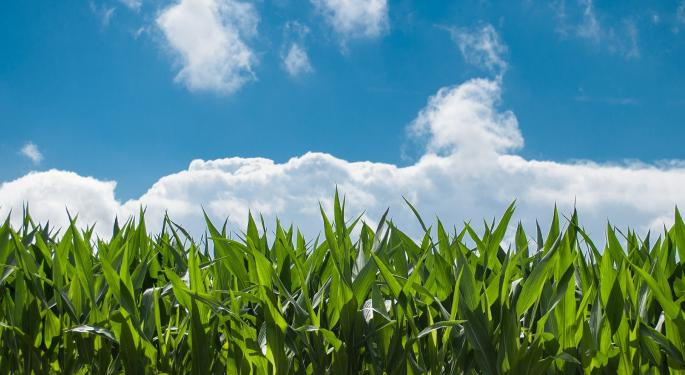 A Wet Spring Delayed The US Corn Harvest