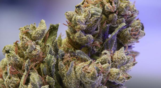 OG Kush Changed Weed Culture: These 7 Strains Carry Its Legacy