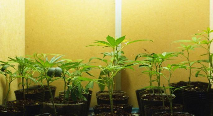 The Week In Cannabis: A&F Tries CBD, GW Pharma Soars On Results, Denver Decriminalizes Mushrooms