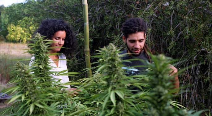 Why Cannabis Investors Are Eyeing South America