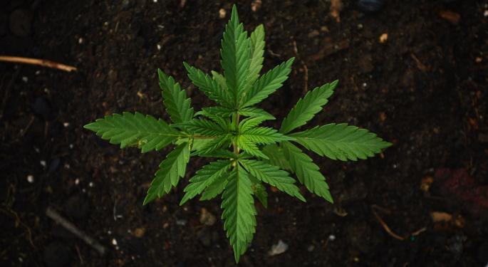 Report: Aurora Cannabis Set To Trim Workforce By 10%