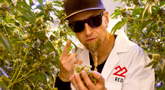 22Red, The Cannabis Co. Founded By SOAD's Shavo Odadjian, Launches In Arizona