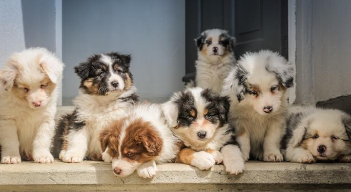 Estas imitaciones de DOGE y Shiba Inu registran ganancias masivas
