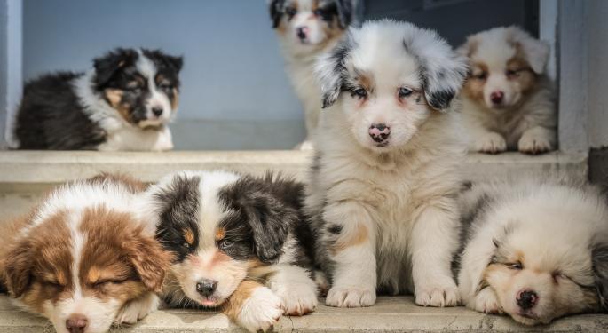 Esta imitación de DOGE y SHIBA sube un 1.033,87%