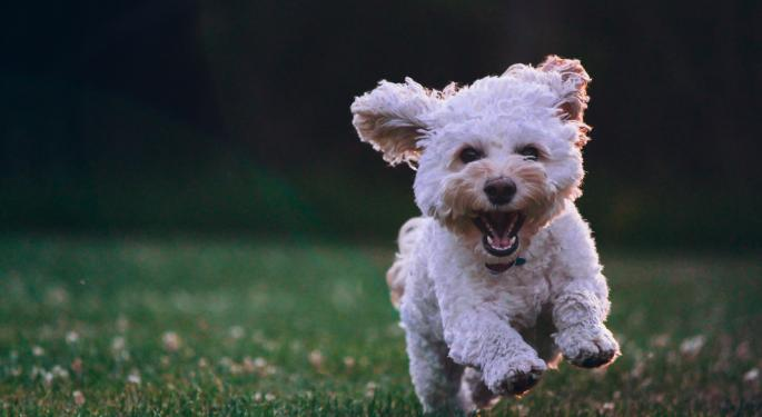 Un enigmático tuit de Dorsey agita la comunidad Doge