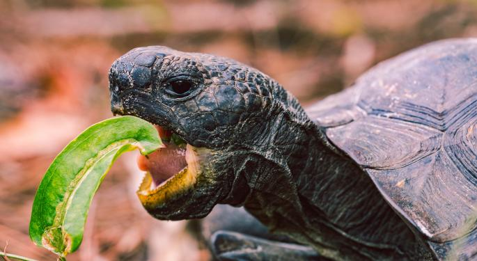 Green Rushed: Why The Tortoise Will Win The Cannabis Race