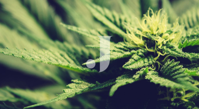 Jushi Plans To Open 5 Cannabis Dispensaries In Virginia
