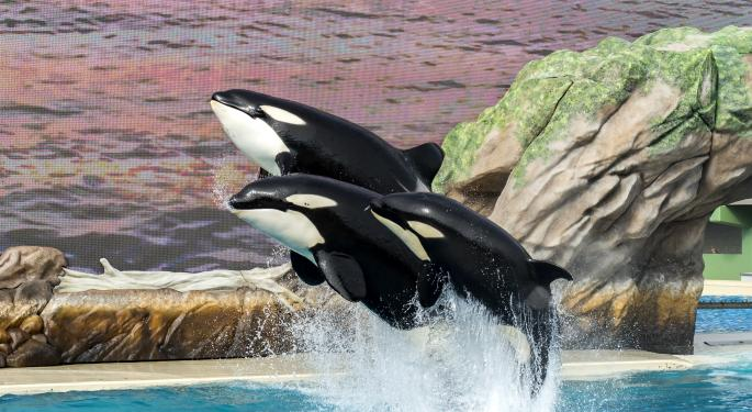 Pop Star Pink Confronts SeaWorld On PETA's Behalf During Shareholder Meeting
