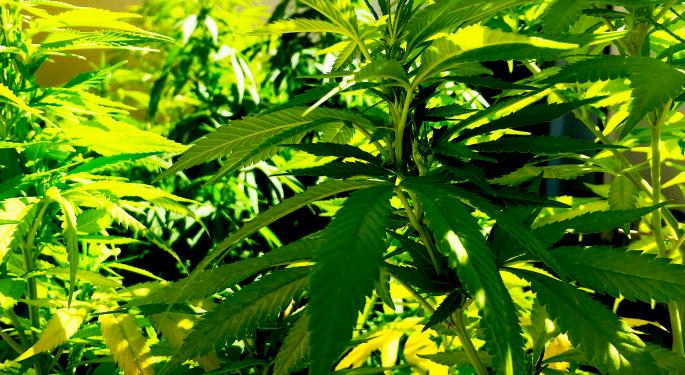 3 Reasons Why Entrepreneurs Need To Pay Attention To CBN, The Next Emerging Cannabinoid