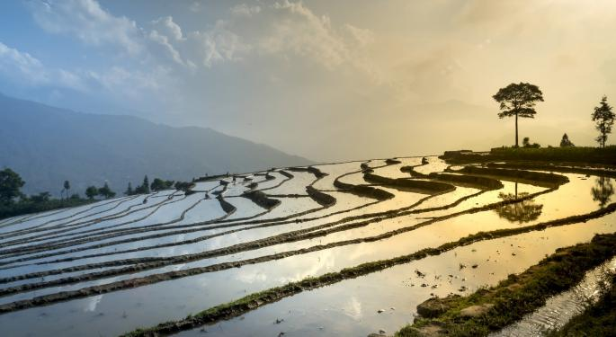 Rice Prices At Highest Levels Since 2013