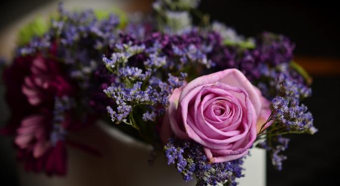 Flower Plays On Valentine's Day