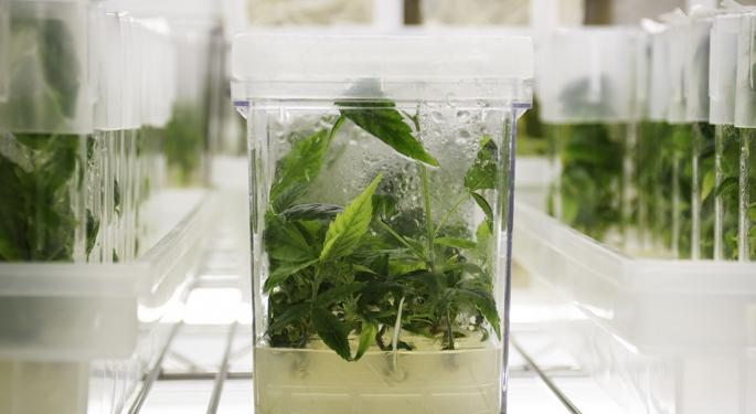This Company Is Sending Hemp Tissue Culture To Outer Space