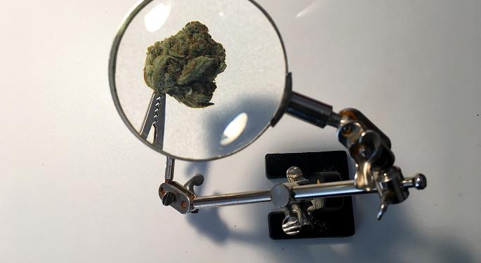 Harvard Researchers To Explore Cannabis As Medicine For Less-Affluent Nations