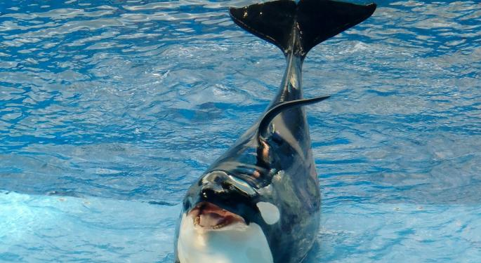 3 Takeaways From SeaWorld CEO's Surprise Resignation