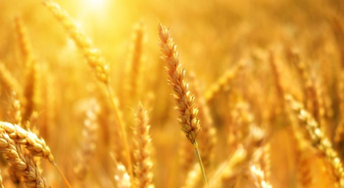 US Department Of Agriculture Lowers Export Estimates For Corn, Wheat